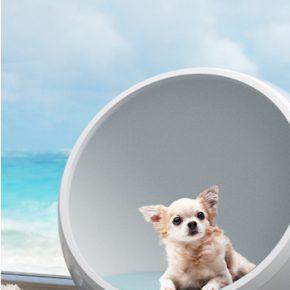 Waarom ligt je hond zo graag in de snikhete zon?