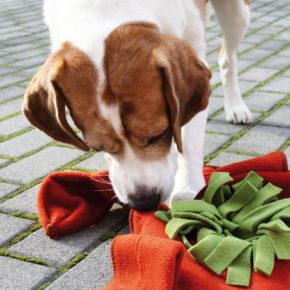 Snuffelmatten, een spel voor hond en baasje.